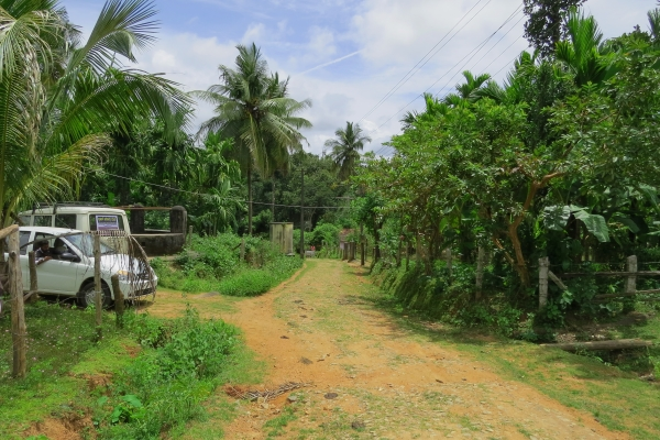 Chiduva village - road and forest - photo by Sarah Burthe