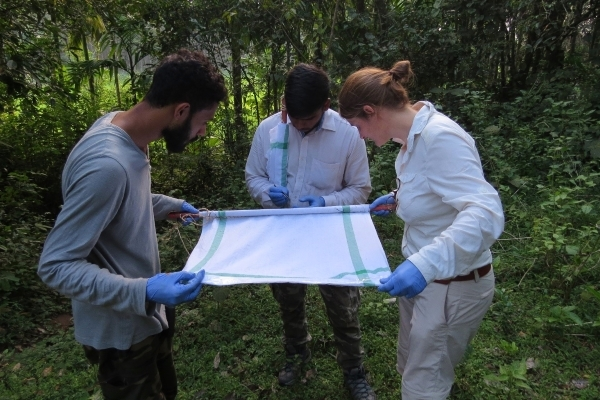 Fieldwork pilot - researchers inspecting the drag fabric for ticks